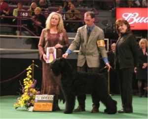 Ch Hohotushka s Zolotogo Grada - First Black Russian Terrier to win the breed at the Westminster Kennel Club Show in New