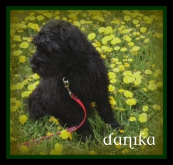 Our puppy 'Danika'