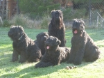 The Snowline BRTs!...  'Olive' (sitting) 'Raven' (laying) middle, 'Uriah' (sitting)In the front..  'Petrovich' (